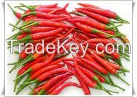 Fresh Chili, Vietnam fresh green - red chili, birds eye chili