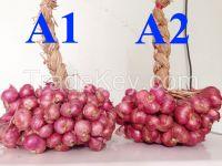 Red Onions / Fresh Red Onions / Fresh Onions / Small Onions