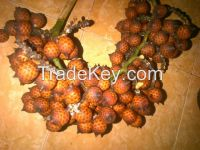 rattan seeds and moringa