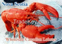 Canadian Live Lobster