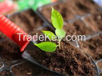 The best Peat Moss for Fertilizing / Greenhouse / Lawn planting mixes!