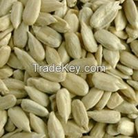 Sunflower seeds 5009, size 24/64