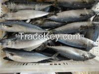 canned saltwater mackerel
