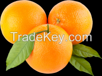 Fresh and Frozen Citrus Fruit