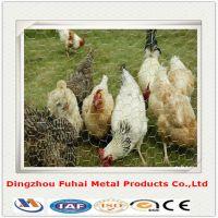 Chicken mesh hot sale