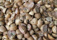 Betel Nut Split 80%-85%