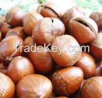 Sell Hazelnut