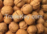 Sell Walnuts