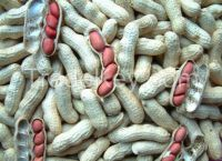 peanuts/groundnuts
