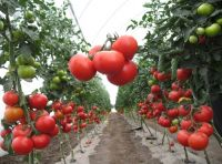 Urgently required investments for the construction of the agrarian sector in Ukraine.