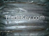 High Quality Frozen Ribbon Fish