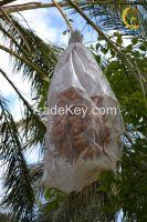 """Organic Dates """"Deglet Nour"""""""