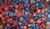 wild strawberries, raspberries, red currants, and garden strawberries