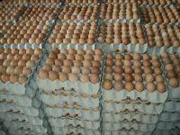 Fresh Chicken eggs, Fertilized Hatching Eggs chicken egg, Halal frozen chicken , ostrich egg, Parrots Eggs
