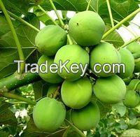 refined & crude Jatropha Oil for biodiesel/crude jatropha oil price