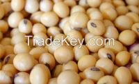 Wholesale GMO SOYA BEANS
