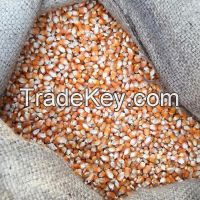 High Quality Yellow Corn Seed Animal Feed for Sale