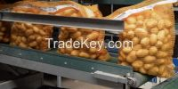 Quality Potato from Pakistan at reasonable price 40ft Reefer