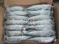 Frozen Horse Mackerel Fish - Mackerel Fish exporters / Frozen Horse Mackerel Whole Round