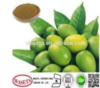 Olive leaf extract / Olea Europaea L./Oleuropein