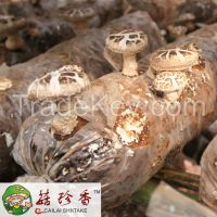 Dried Shiitake Mushroom Spawn with High Quility