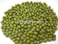 Green Mung Beans / Green Gram / Vigna radiata (Red Ruby).