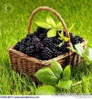 willow fruit baskets, wicker fruit baskets