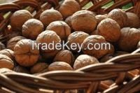 Walnuts wholesale price