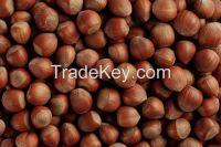 Hazelnuts From The Black Sea Coast of Turkey