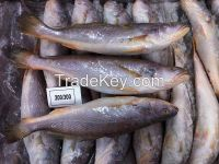 frozen and dried fishes