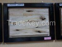 Plywood , Barecore , Pallets , Blockboard Falcata Albazia