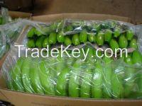 Fresh Cavendish Bananas with high quality 2016