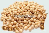 Yellow Soybean/Non GMO Soybean