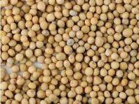 Pure Brown Mustard Seeds