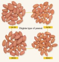 Java Peanut kernels