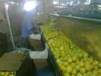 South Africa Eureka and Adalia Lemon
