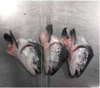 Frozen Salmon Head 450 gram + V-Cut