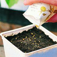 Flower Seeds & Seedlings