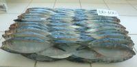 High Quality Sea Frozen Sardine Fish