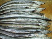 FROZEN Conger Eel Fish