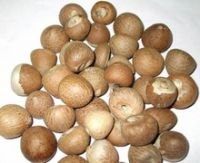 Whole Betel Nuts (Areca Nut) - Best Price and Quality- Free Sample