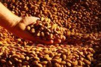 Grade AAAA Almond Nuts Price / Almond Kernel / Almond Wholesale Price