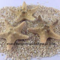 Philippine Starfish Bleached