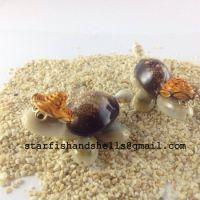 Caput Turtle seashell with hat