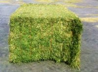 High Quality Alfalfa Hay for Animal Feed