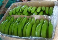 100 % NATURAL CAVENDISH GREEN BANANA