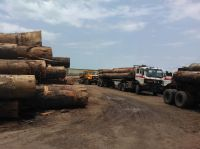Tali Logs and Lumbers