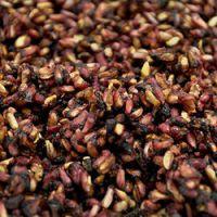 Pomegranate Seeds - Punica Granatum