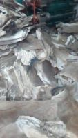 100% Wet and Salted Donkey Hides, Cow Hides, Sheep and Goat Skin, Sea Horse, Stingray Skin, Buffalo Skin,
