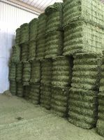 DEHYDRATED ALFALFA VERY GREEN AND GOOD QUALITY